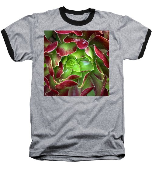 Christmas Succulent Baseball T-Shirt by Russell Keating