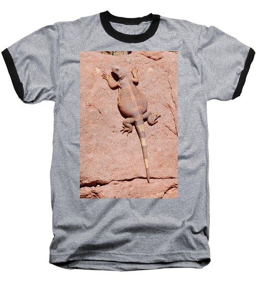 Chuckwalla, Saurolamus Ater Baseball T-Shirt