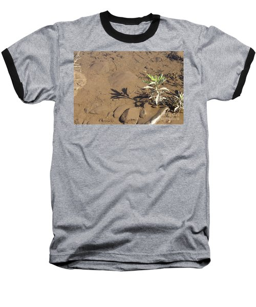 Baseball T-Shirt featuring the photograph Circle Shadow Plant by Marie Neder