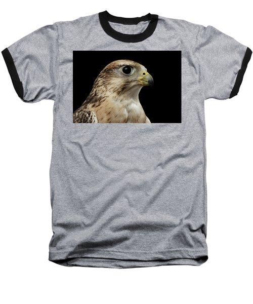 Close-up Saker Falcon, Falco Cherrug, Isolated On Black Background Baseball T-Shirt by Sergey Taran