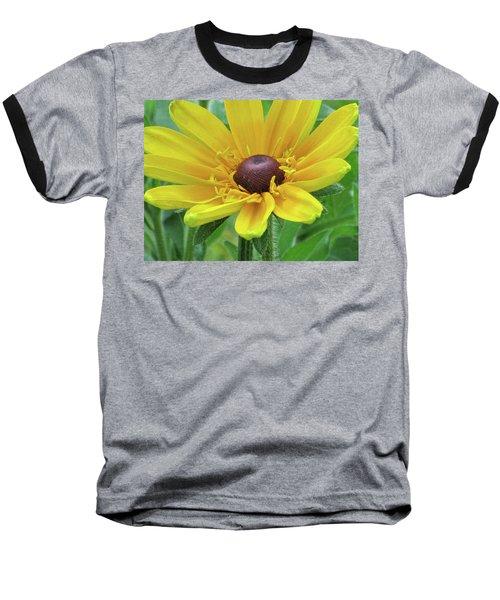 Close Up Summer Daisy Baseball T-Shirt by Michele Wilson