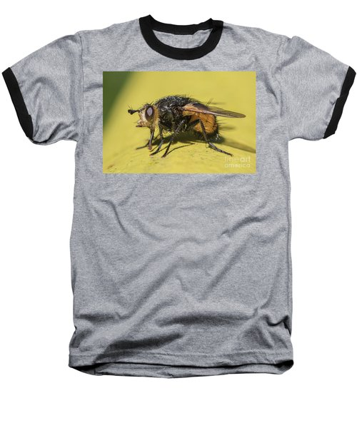 Close Up - Tachinid Fly - Nowickia Ferox Baseball T-Shirt