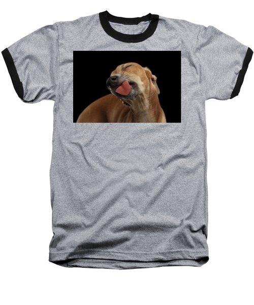 Closeup Cute Italian Greyhound Dog Licked With Pleasure Isolated Black Baseball T-Shirt by Sergey Taran