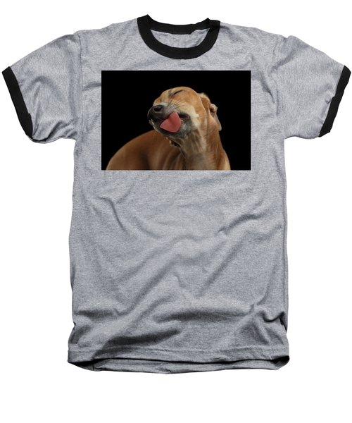 Closeup Cute Italian Greyhound Dog Licked With Pleasure Isolated Black Baseball T-Shirt