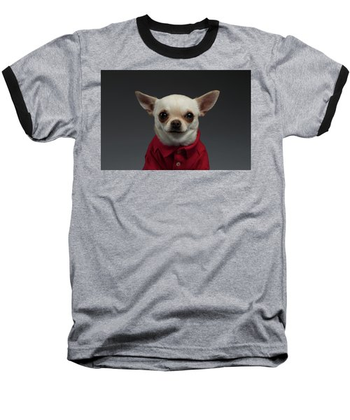 Closeup Portrait Chihuahua Dog In Stylish Clothes. Gray Background Baseball T-Shirt