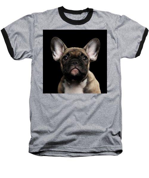 Closeup Portrait French Bulldog Puppy, Cute Looking In Camera Baseball T-Shirt by Sergey Taran