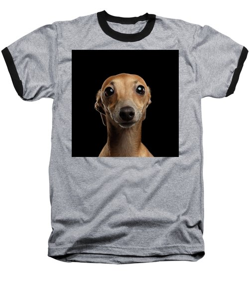 Closeup Portrait Italian Greyhound Dog Looking In Camera Isolated Black Baseball T-Shirt