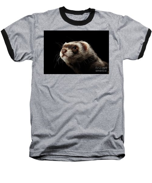 Closeup Portrait Of Funny Ferret Looking At The Camera Isolated On Black Background, Front View Baseball T-Shirt