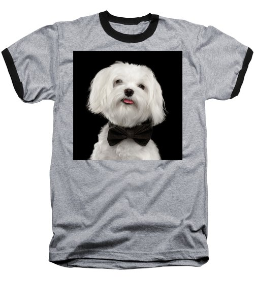 Closeup Portrait Of Happy White Maltese Dog With Bow Looking In Camera Isolated On Black Background Baseball T-Shirt by Sergey Taran