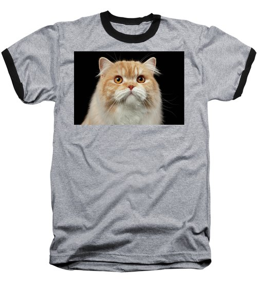 Closeup Portrait Of Red Big Persian Cat Angry Looking On Black Baseball T-Shirt