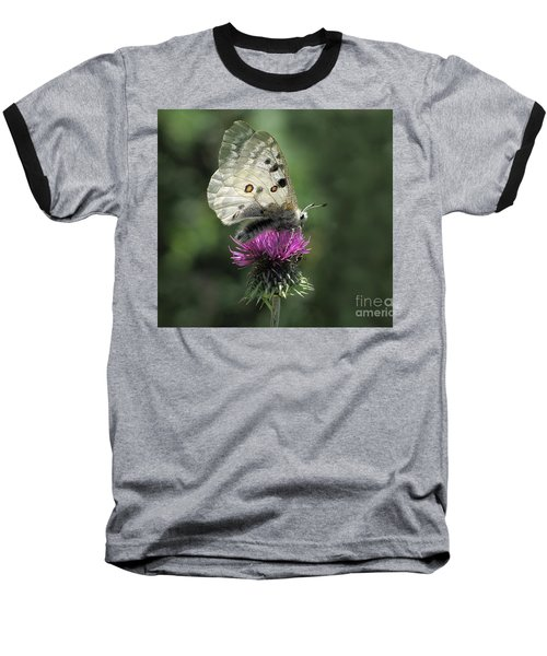 Clouded Apollo Butterfly Baseball T-Shirt by Jacqi Elmslie
