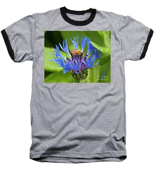 Collecting Pollen Baseball T-Shirt