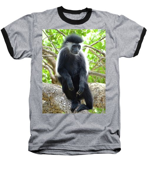 Colobus Monkey Sitting In A Tree 2 Baseball T-Shirt