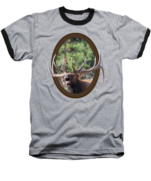 Baseball T-Shirt featuring the photograph Colorado Bull Elk by Shane Bechler