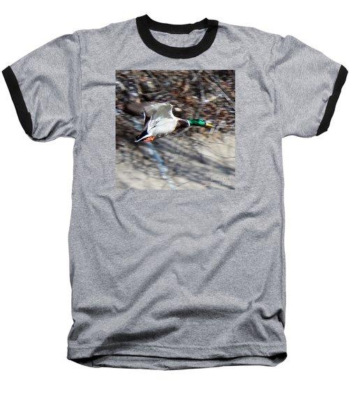 Colorado Mallard In Flight Baseball T-Shirt