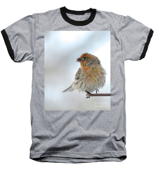 Colorful Finch Eating Breakfast Baseball T-Shirt