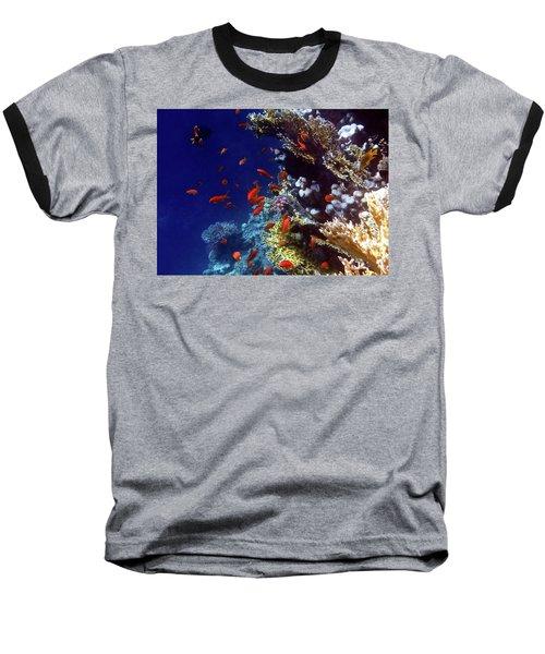 Colorful Lyretail Anthias Baseball T-Shirt
