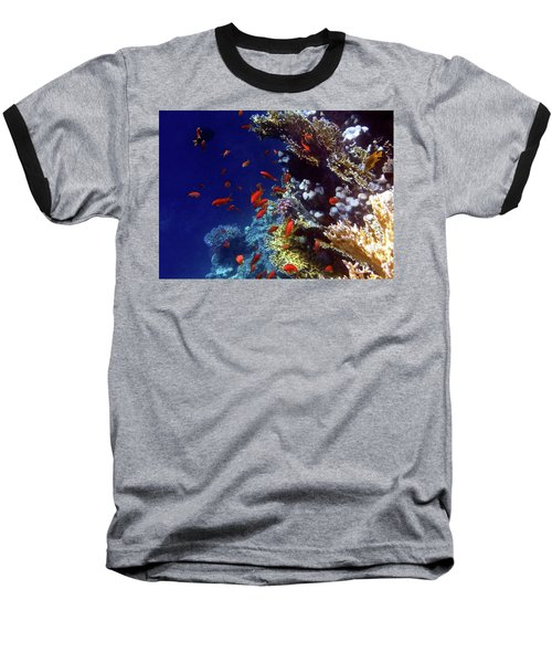 Colorful Lyretail Anthias Baseball T-Shirt
