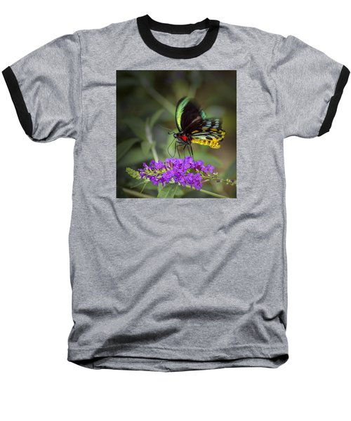 Baseball T-Shirt featuring the photograph Colorful Northern Butterfly by Penny Lisowski