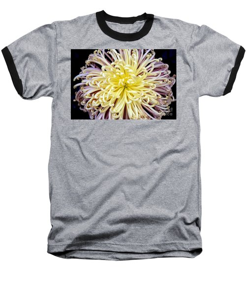 Colorful Spider Chrysanthemum   Baseball T-Shirt