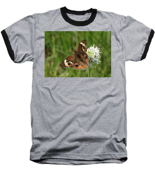 Common Buckeye Butterfly On Wildflower Baseball T-Shirt by Sheila Brown