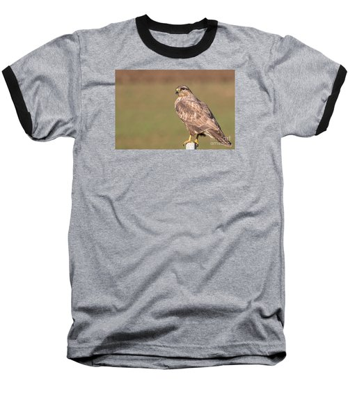 Baseball T-Shirt featuring the photograph Common Buzzard Along The Highway Nis Budapest by Jivko Nakev