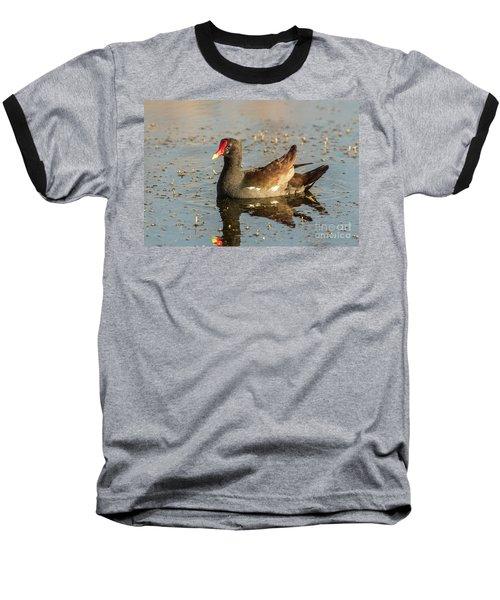 Common Gallinule Baseball T-Shirt by Robert Frederick