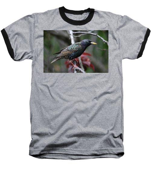 Common Starling Baseball T-Shirt by Trina Ansel