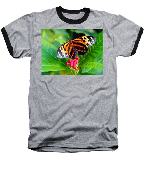 Common Tiger Glassywing Butterfly Baseball T-Shirt