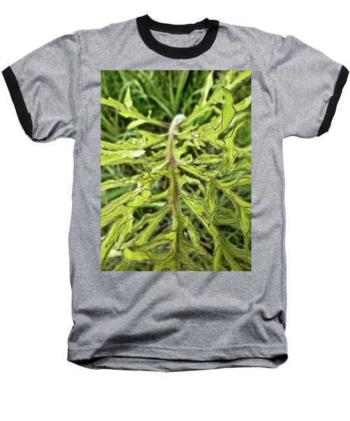 Compass Plant Baseball T-Shirt by Tim Good
