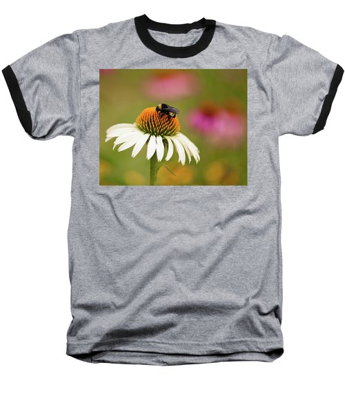 Coneflower And Bee Baseball T-Shirt by Phyllis Peterson