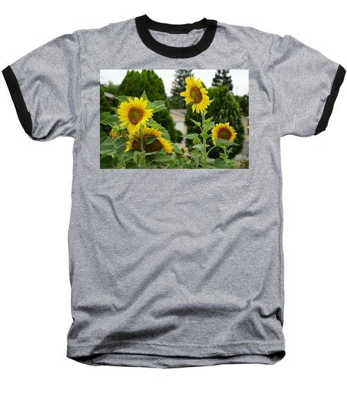 Conversing Sunflowers Baseball T-Shirt