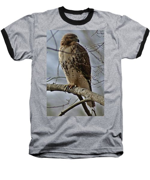 Cooper's Hawk 2 Baseball T-Shirt by Joe Faherty