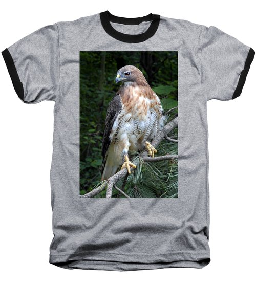 Coopers Hawk Baseball T-Shirt by Dave Mills