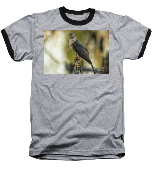 Cooper's Hawk Baseball T-Shirt