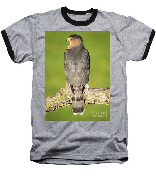 Cooper's Hawk In The Backyard Baseball T-Shirt