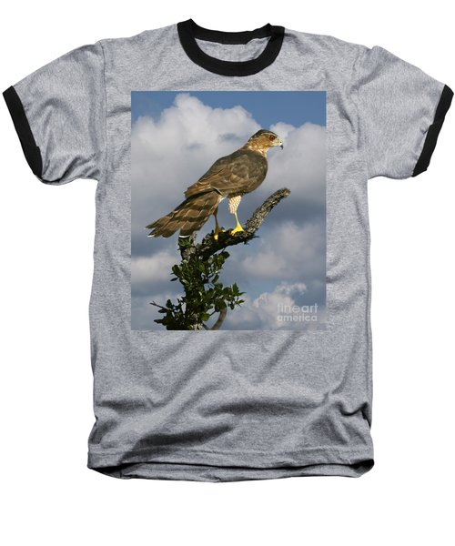 Cooper's Hawk On Watch Baseball T-Shirt