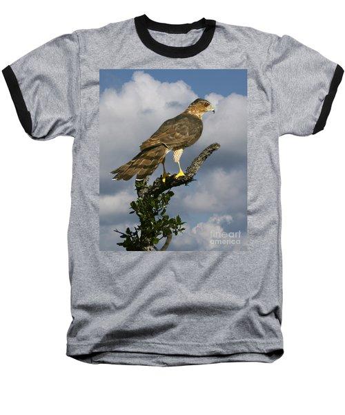 Cooper's Hawk On Watch Baseball T-Shirt