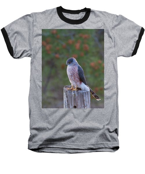 Coopers Hawk Perched Baseball T-Shirt
