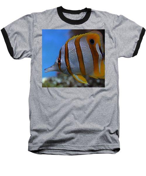 Copperband Butterflyfish Chelmon Rostratus Baseball T-Shirt
