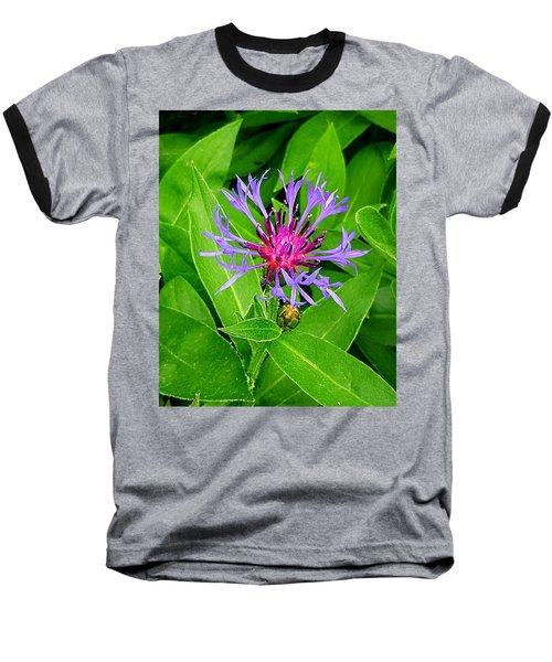 Centaurea Montana Baseball T-Shirt