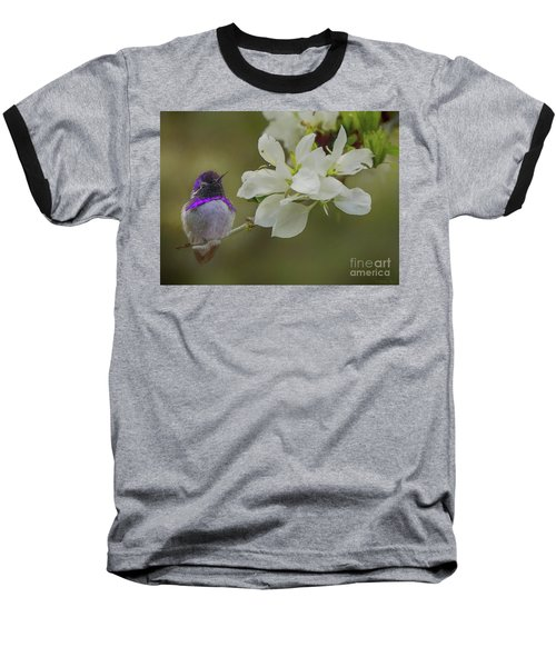 Costas Hummingbird On An Anacacho Orchid Branch Baseball T-Shirt