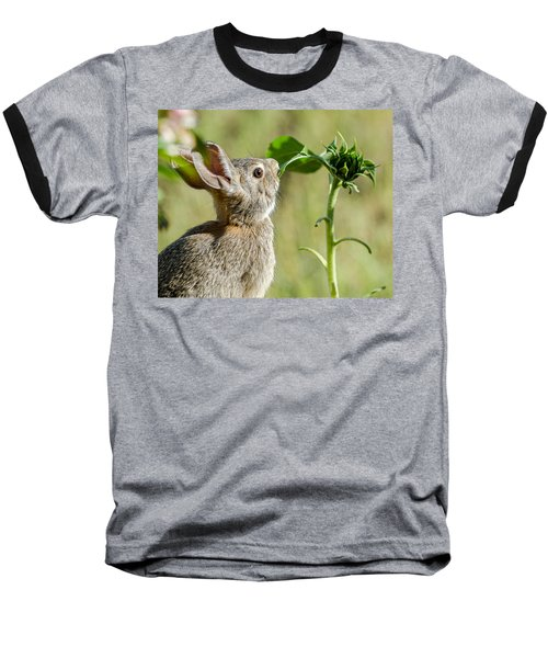 Cottontail Rabbit Eating A Sunflower Leaf Baseball T-Shirt