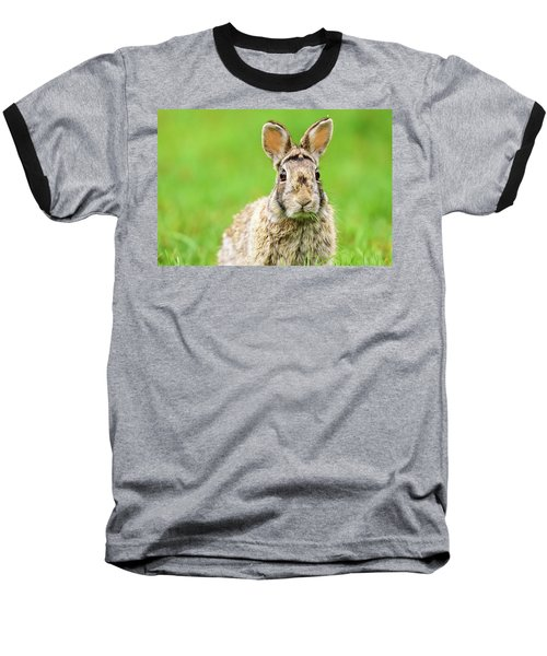 Cottontail Rabbit Baseball T-Shirt
