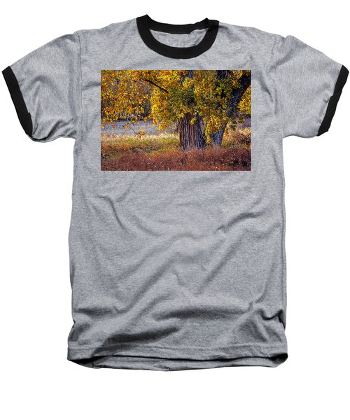 Cottonwood #6 Fountain Creek, Colorado In Fall Baseball T-Shirt by John Brink