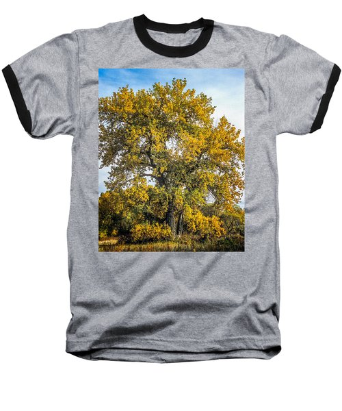 Cottonwood Tree # 12 In Fall Colors In Colorado Baseball T-Shirt by John Brink