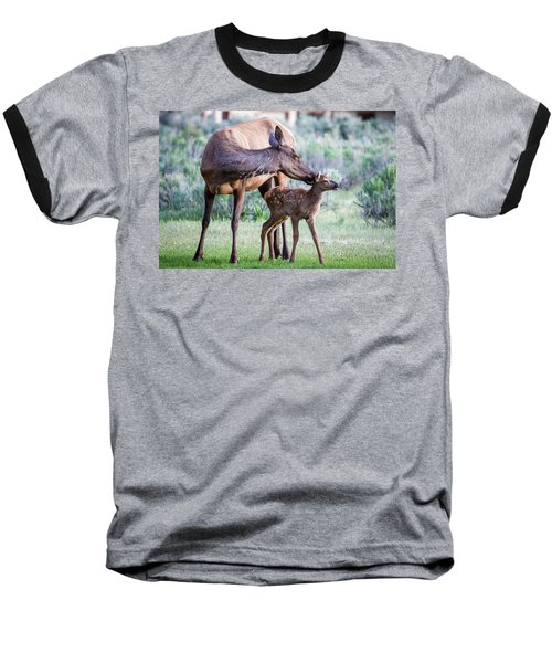 Baseball T-Shirt featuring the photograph Cow And Calf Elk by Wesley Aston