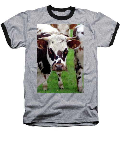 Cow Closeup Baseball T-Shirt