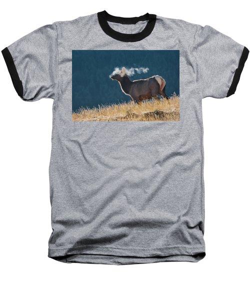 Cow Elk With Steamy Breath Baseball T-Shirt