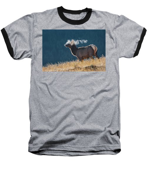 Cow Elk With Steamy Breath Baseball T-Shirt
